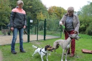 Eerste hondenlosloopweide van Maldegem officieel geopend