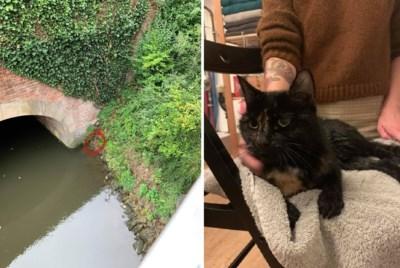 """Hoewel ze zelf een nat pak riskeerden, slaagt koppel er toch in om katje van steile oever te redden: """"Maar noem dit alsjeblief niet speciaal"""""""