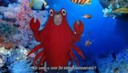 """COLUMN. """"Bart Tommelein droeg een krabbenpak. Jezelf voor schut zetten kan ook zonder"""""""