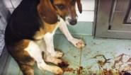Harde undercoverbeelden uit horrorlabo: achtergelaten hond sterft, aap wordt tegen deurpost gegooid