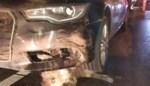 Automobilist rijdt in één klap 19 everzwijnen aan in Heusden-Zolder