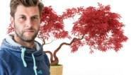 De perfecte boom voor je binnenplaats: Bartel Van Riet tipt de Japanse esdoorn
