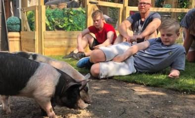 """""""Word vegetariër of eet je huisdier op"""": nieuwe realityshow schokt Verenigd Koninkrijk"""
