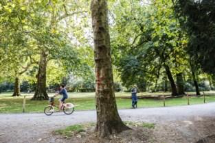 Aantal dode jonge bomen in de stad in een jaar verdubbeld