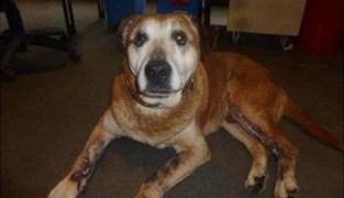 Op het nippertje gered, maar nu toch overleden: hond Omer is niet meer