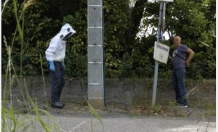 Free the bee: Dimi breekt in zijn documentaire een lans voor wilde bijen