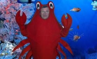 """""""Bart Tommelein droeg een krabbenpak. Jezelf voor schut zetten kan ook zonder"""""""
