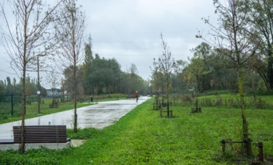 Groen wil sterfte jonge bomen bestrijden met boomwaterzakken