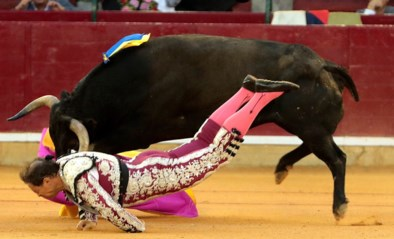 Spaanse toreador vecht voor zijn leven nadat stier hem spietst en meesleurt door arena