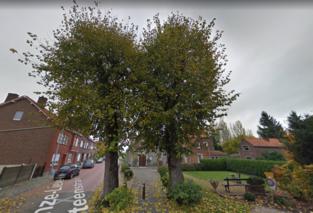 Een van de twee lindes aan kapel in Grimde verdwijnt