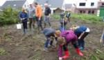 Regenboogkinderen verkopen aardappelen en prei