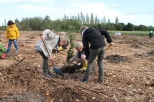 Leerlingen Broederschool planten een bos