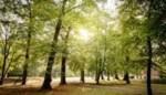 550 bomen Hof Ter Laken worden in winter gekapt