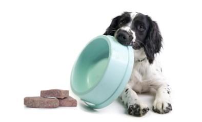 Rauw hondenvoer is hip, maar niet zonder gevaar