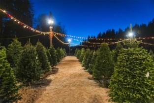 Pleidooi voor bos voor afgedankte kerstbomen klinkt charmant, maar groendienst ziet dat niet zitten