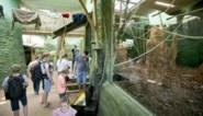 Planckendael werkt aan logistiek complex met operatiezaal en dierenkeuken