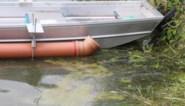 Brugge vindt de oplossing tegen blauwalgengroei: ultrasoon signaal vermindert gezondheidsrisico's voor mens en dier