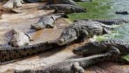 Chinese douane neemt 806 met uitsterven bedreigde krokodillen in beslag
