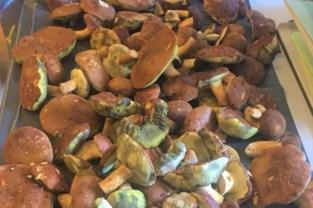Op geld beluste wildplukkers roven massaal paddenstoelen uit onze bossen