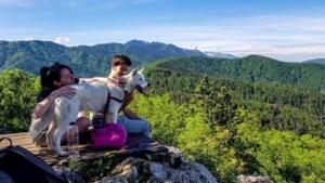 Airbnb gaat nu ook diervriendelijke activiteiten aanbieden