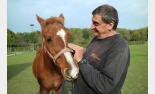 Jarenlang maakten kinderen ritjes op rug Djapa, nu gaat pony met 'pensioen' (en dat ziet er veelbelovend uit)