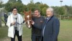 FOTO. Djapa geniet van  pensioen in De Brielmeersen