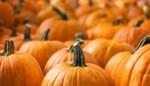 Halloween met soep, bloemen, fakkels en een échte heks