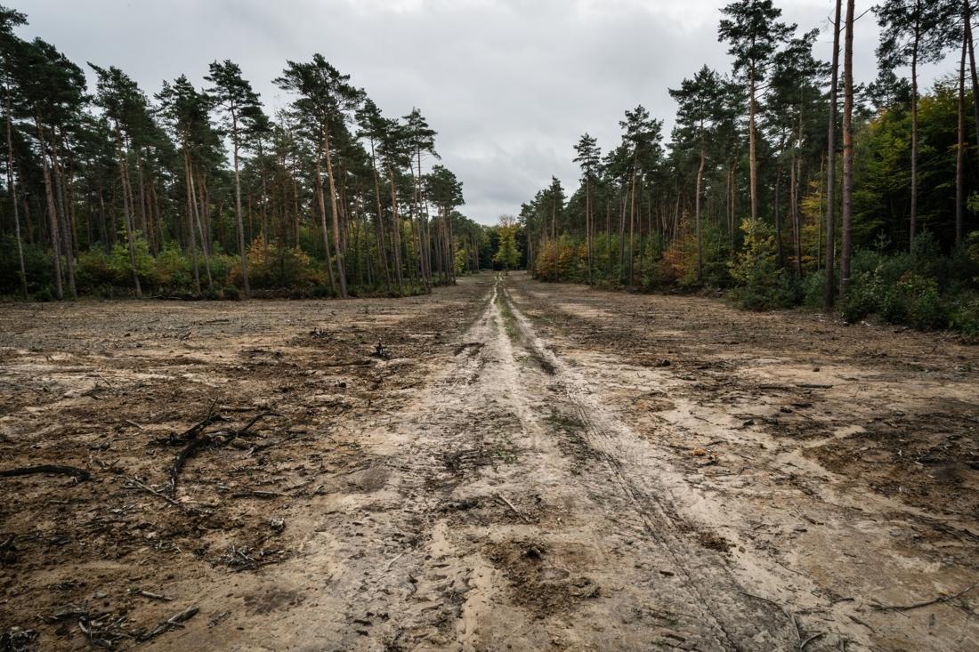 Burgers trekken aan alarmbel na kaalslag in bos, maar wetenschappers geven hen ongelijk