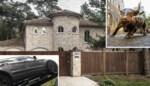 'Koning van het lachgas' zit achter de tralies: riante villa met 'Wall Street'-stier in tuin in beslag genomen