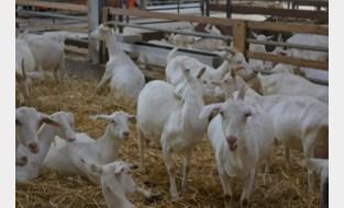 Crowdfunding voor geitenboerderij
