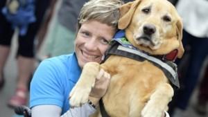 Na het overlijden van Marieke 'Wielemie' Vervoort: wat gebeurt er met haar honden?