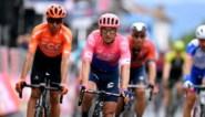 Sacha Modolo sprint volgend jaar aan de zijde van Mathieu van der Poel en Tim Merlier bij Corendon-Circus
