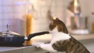 """Brandweer waarschuwt voor katten in de keuken: """"Deze week al drie branden door katten op het fornuis"""""""