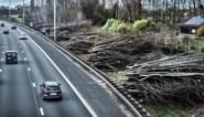 Natuur en Bos gaat minder bomen kappen