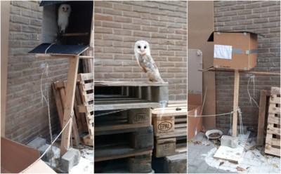 """Kerkuil in beslag genomen in Antwerpse garage: """"Manier waarop hij moest leven, was schandalig"""""""