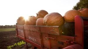 """Antigifcentrum waarschuwt voor giftige pompoenen: """"Ze zijn niet allemaal eetbaar"""""""