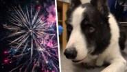 """Vrouw woedend nadat haar hond doodsbang reageert tijdens vuurwerk: """"Zou verboden moeten worden"""""""