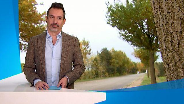Meer dan dertig eiken eiken gekapt tussen Bierbeek en Hoegaarden om nieuwe fietspaden aan te leggen