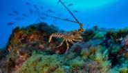 Plastic van visgerei vormt gevaar in zee, aldus Greenpeace