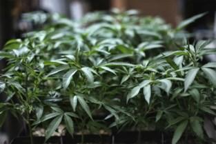 Tot 40 maanden cel voor jonge Peerse cannabistelers