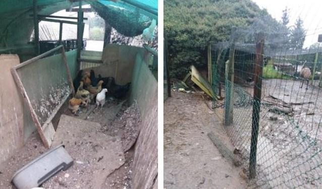 """449 verwaarloosde vogels weggehaald bij bejaarde man in Haacht: """"Er was kannibalisme door de honger"""""""