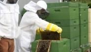 """Oplossing voor afnemende populatie blijkt averechts te werken: """"Plaats geen bijenkasten meer"""""""