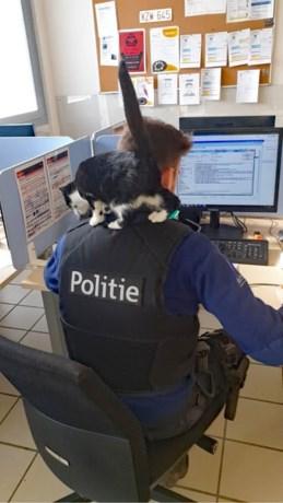 Kat maakt uitstapje van 70 kilometer en wordt beste maatjes met politieagenten