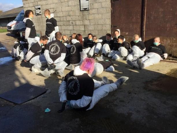 """Dierenrechtenactivisten bezetten eendenkwekerij waar de laatste """"Vlaamse foie gras"""" gemaakt wordt"""