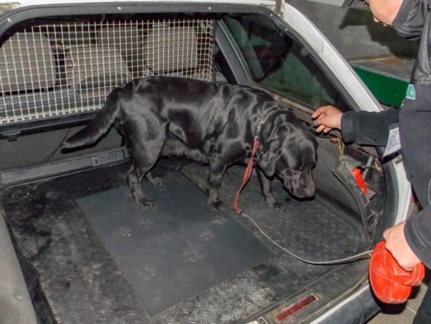 Belgische (39) in Franse cel: betrapt op terugweg van vakantie met haar drie kinderen en 111 kilo hasj