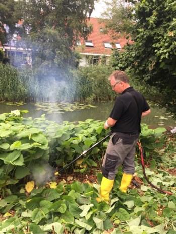 Goedkoper dan tuin afgraven maar niet zonder gevaar: onkruid bestrijden met 4.000 volt