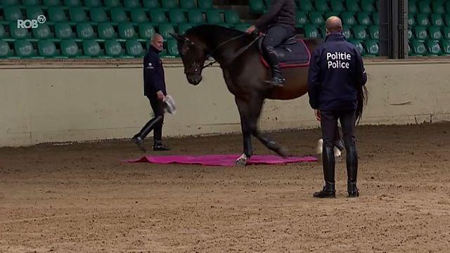 VIDEO. Federale politie zoekt paarden via open kijkdag in ruiterschool van Oud-Heverlee