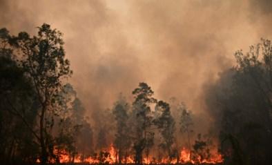 """Australië bereidt zich voor op """"een van de gevaarlijkste dagen uit de geschiedenis"""" door catastrofale bosbranden"""