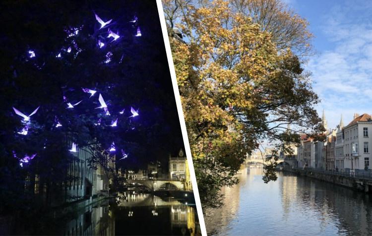 Populaire 'blauwe vogeltjes' weggehaald uit boom in Gent - Het Nieuwsblad