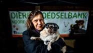 Carla wilde dat elke hond gelukkig is, ook als baasje arm is: nu geeft ze al bijna 200 dieren eten